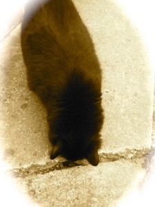 My cat, sniffing his crack.